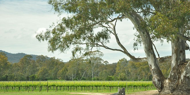 Australian Wine Tasting: Route du Van Dolcetto Shiraz and Alkoomi Riesling