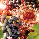 Koutsogiorgakis Winery's Grapes
