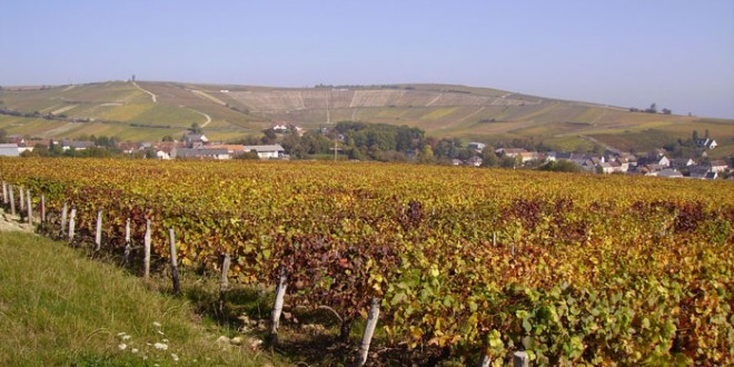 New Arrivals: B. Millet Sancerre Rouge and Gros Ventre Pinot Noir