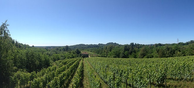 Le Piane: A Renaissance in the Northern Italian Vineyards
