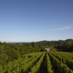 Le Piane Meridiana Vineyard Landscape