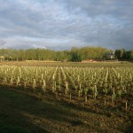 Margaux Vineyard