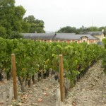 Vineyards in Saint Julien