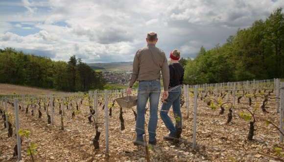 A Chablis Producer to Discover