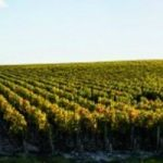 Pauillac - Lynch Bages