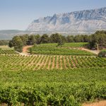 Chateau Coussin Vineyards