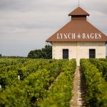 Chateau Lynch-Bages 2016 vineyard
