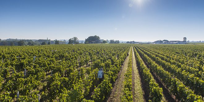 Futures 2016: Top appellations from the Right Bank