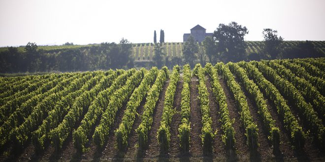 Futures 2016: Top appellations from the Left Bank