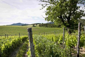 Tuscany: Home of Southern Italy's Treasures