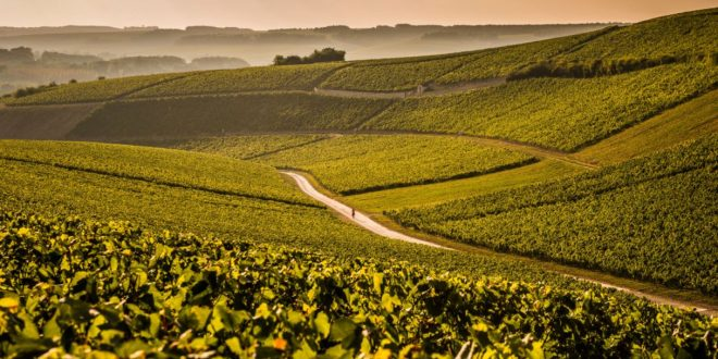 Focus on Chablis | Chardonnay from Burgundy's Golden Gate
